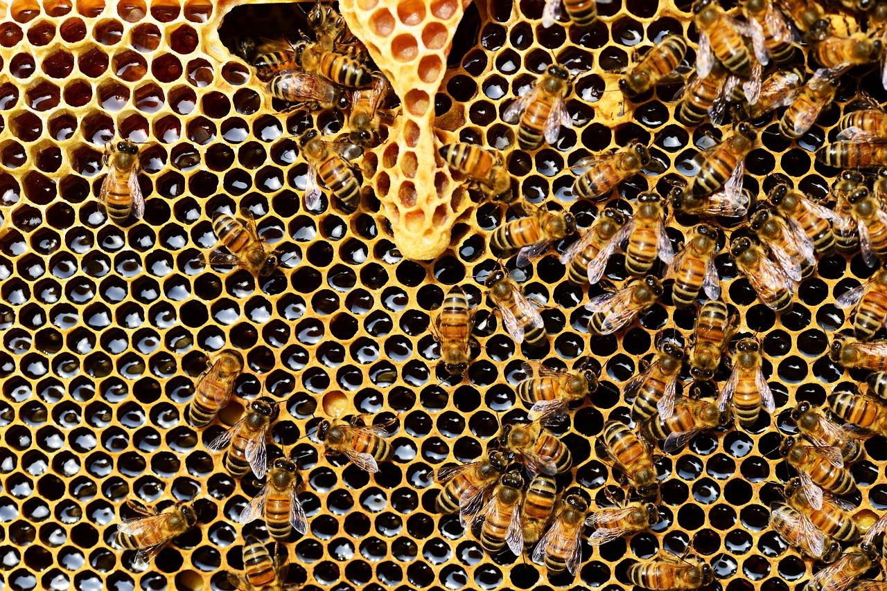 """Einladung zu Ferienveranstaltung """"Die fleißigen Bienen"""" – jetzt noch schnell anmelden!"""