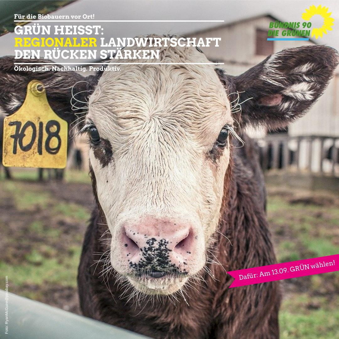 Grün heißt: Regionaler Landwirtschaft den Rücken stärken!