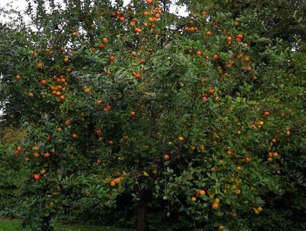 Antrag: Obstbaum für Neugeborene