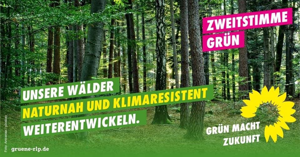 SAMSTAG, 11. SEPTEMBER 2021 VON 14:00 BIS 16:00: Freudenberger Grüne laden zu Waldwanderung ein